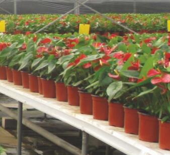 Double-Color Flower Pots